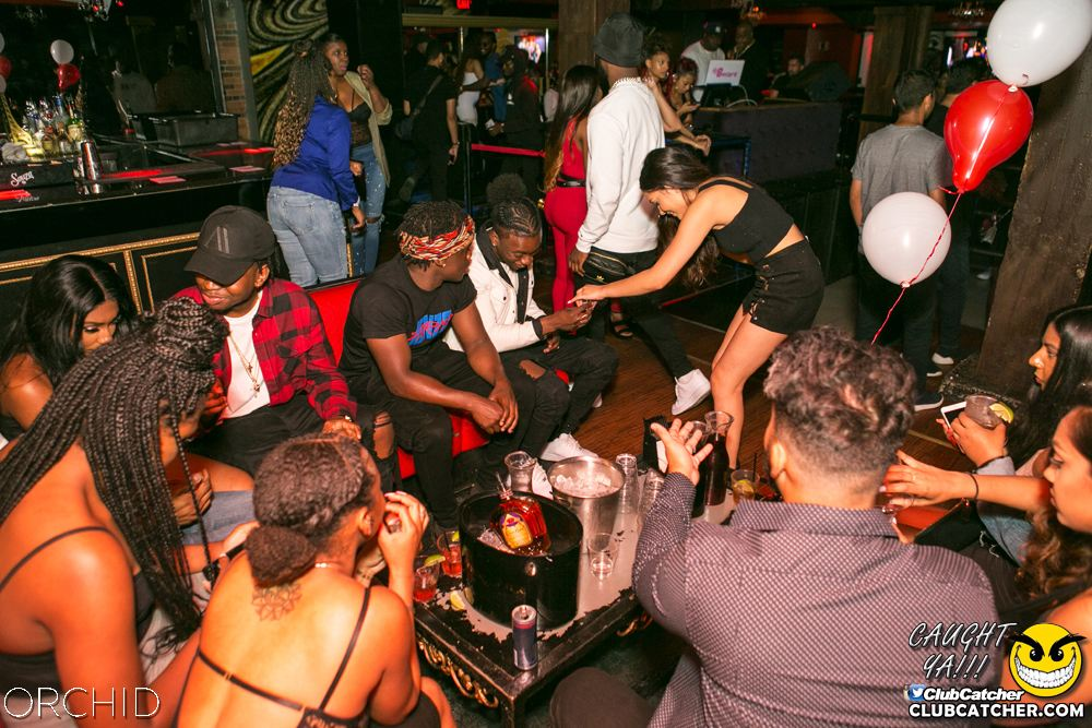 Orchid nightclub photo 51 - June 29th, 2019