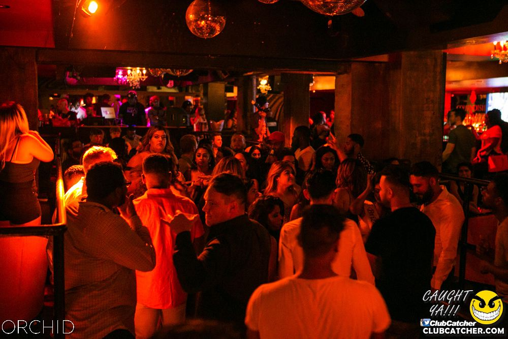 Orchid nightclub photo 56 - July 13th, 2019