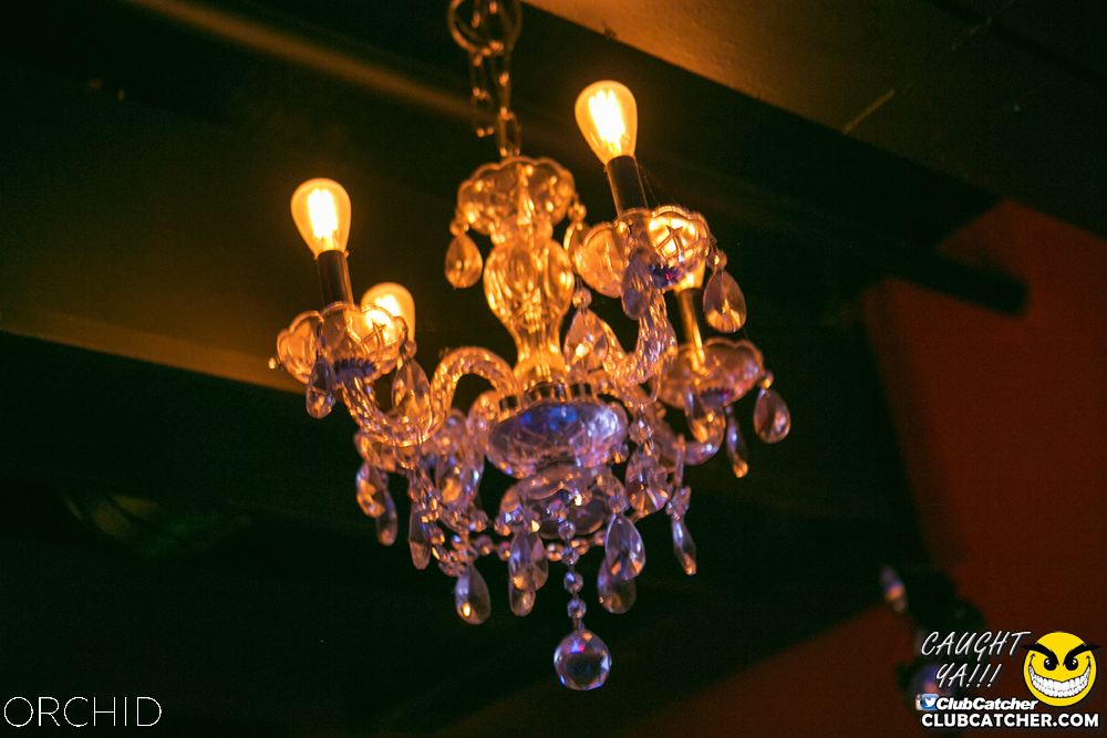 Orchid nightclub photo 33 - July 20th, 2019