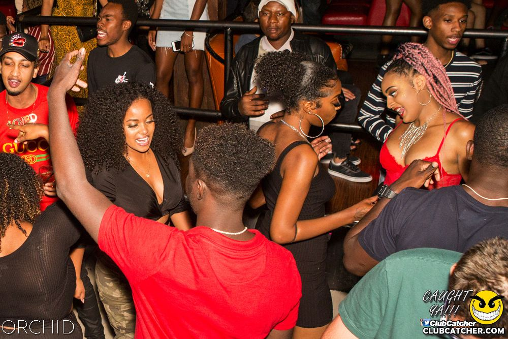 Orchid nightclub photo 36 - September 14th, 2019